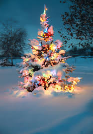 christmas tree with snow snow covered christmas tree with colorful lights re posted flickr