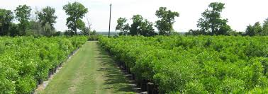 southern native plant nursery native texas nursery wholesale to trade plant dealer in austin