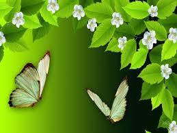 flowers butterflies flowers color attractions dreams