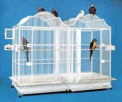 produttori gabbie per uccelli produzione gabbie per uccelli con gabbie per pappagalli in powder