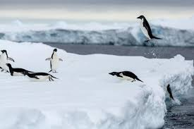 3 6 million more penguins live in antarctica than thought