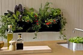 indoor organic gardening in your house wearefound home design