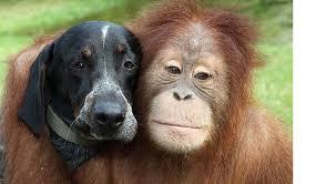 bluetick coonhound youtube friends furever google u0027s subtle dig at apple goes viral