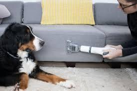 tips for a pet home hgtv