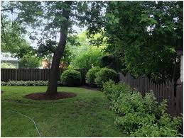 backyards compact river birch trees viburnums and red twig
