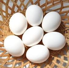 where can i buy duck where can i buy local duck eggs hawaii local food