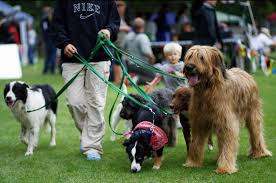 the best careers for dog lovers