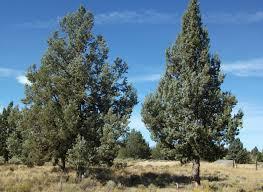 central oregon native plants martin harris oregon dlcd