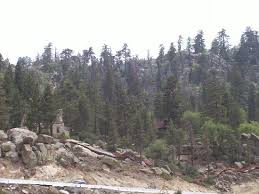 Tree Top Cottage Big Bear big bear lake big bear region ca top tips before you go with
