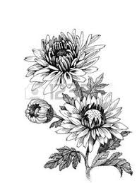 Flower Drawings Black And White - black and white drawing violet flower google search girls
