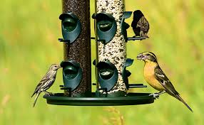 how to feed the birds with limited space