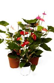 10 best our top 10 office plants images on pinterest office
