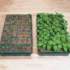 are old seeds still good when do you start seeds can you time