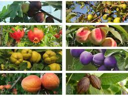 heritage orchard brianna lehman landscape designer