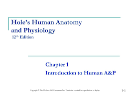What Is Human Anatomy And Physiology 1 Hole U0027s Human Anatomy And Physiology 12th Edition Ppt Video