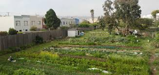San Francisco Urban Garden - despite land tenure challenges san francisco urban farm sets