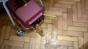 crate training crate training a cat cat and dog lovers cat and dog lovers