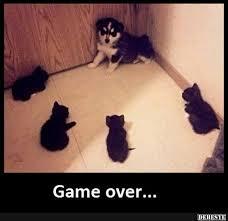 Game Over Meme - game over lustige bilder sprüche witze echt lustig humor