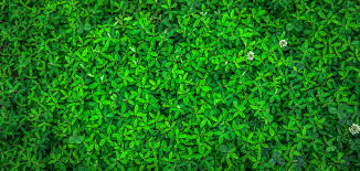 free stock images with the color green 00ff00