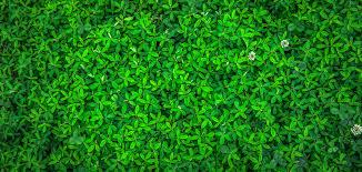 green leaf plant free stock photo