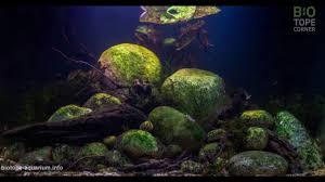 biotope aquarium design contest 2016 top 50 youtube