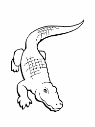 alligator colouring pages colouring pics
