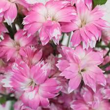 dianthus flower diamond dianthus flower