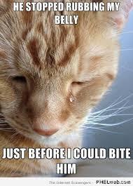First World Problem Meme - first world cat problems meme pmslweb
