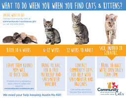 community cats animal services austintexas gov the official