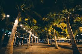 Home Decor Manila Palm Trees At Night In Pasay Metro Manila The Philippines