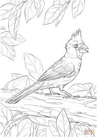 northern cardinal coloring page free printable coloring pages