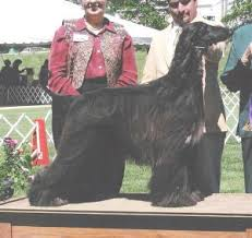 zoso afghan hound favorite links