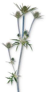 plants quiz test your knowledge on plants dk find out