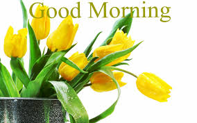 free good morning yellow tulip flowers hd wallpapers download