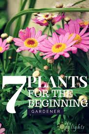 1827 best gardens perennials and annuals images on pinterest