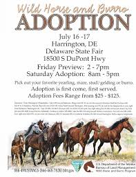 mustang adoption and events shepherd farm
