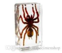 2017 muti color spider specimen acrylic resin insect embedded