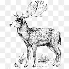 hand drawn sketch deer pattern hand painted sketch fawn png and