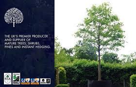 premier trees