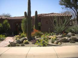 desert native plants beautiful desert landscaping ideas designoursign