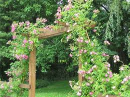 roses for beautiful outdoor decor charming garden designs and