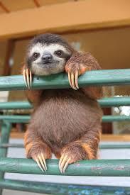 15 unbearably sloth pics to celebrate the international