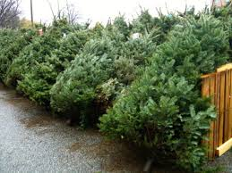 christmas tree sale christmas tree sales benefit ridgeville schools cleveland