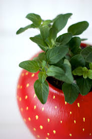 Diy Strawberry Planter by Diy Painted Strawberry Herb Planter U2014 A Charming Project