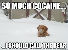 So Much Cocaine Meme - so much cocaine i should call the bear cocaine dog