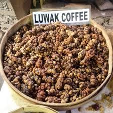 Luwak Coffee luwak coffee pt telaga cipta