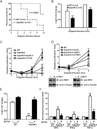 bacterial e3 ubiquitin ligase ipah4 5 of shigella flexneri targets