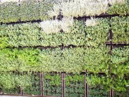 vertical herb garden ideas 21 astounding vertical gardening ideas