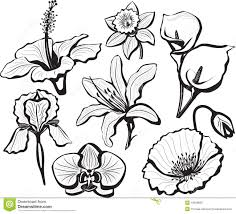 set of flower heads stock vector image of poppy floral 19048660
