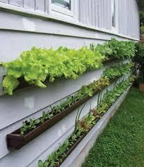home vegetable garden design small decor catalogs best designs